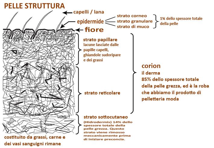 struttura della pelle